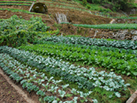 10 Varieties Vegetable Farm