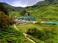 BOH Tea Plantation Factory