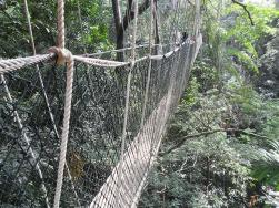 Canopy-Walkway-2