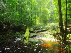 Endau-Rompin-Waterfall-08